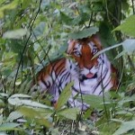 Western businessmen in China - seeing tiger?